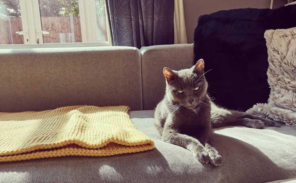 Cats in Spirit